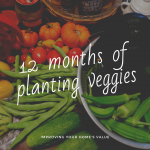 Year long veggie patch guide